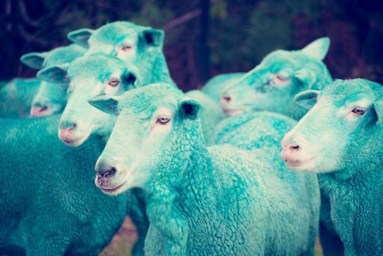 cyan-sheep
