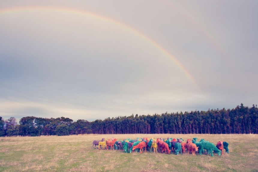 rainbow-sheep-ii